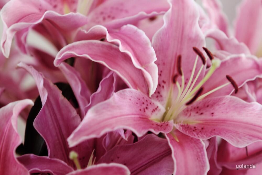 Bunch of Lillies by yolanda