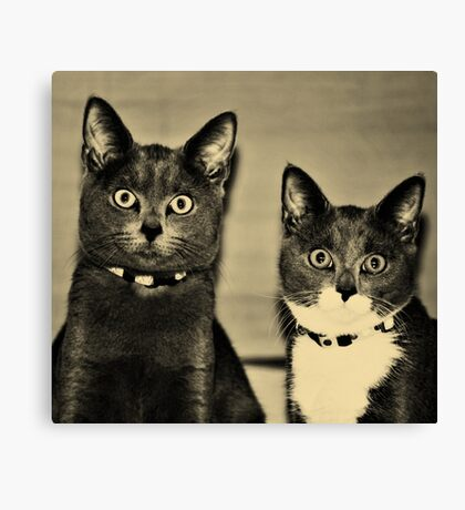 They were asked about their whereabouts during the recent riots involving kitchen paper rolls ... Canvas Print