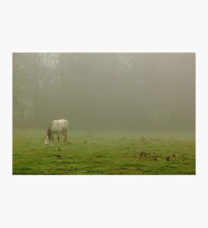 Fog Grazer Photographic Print