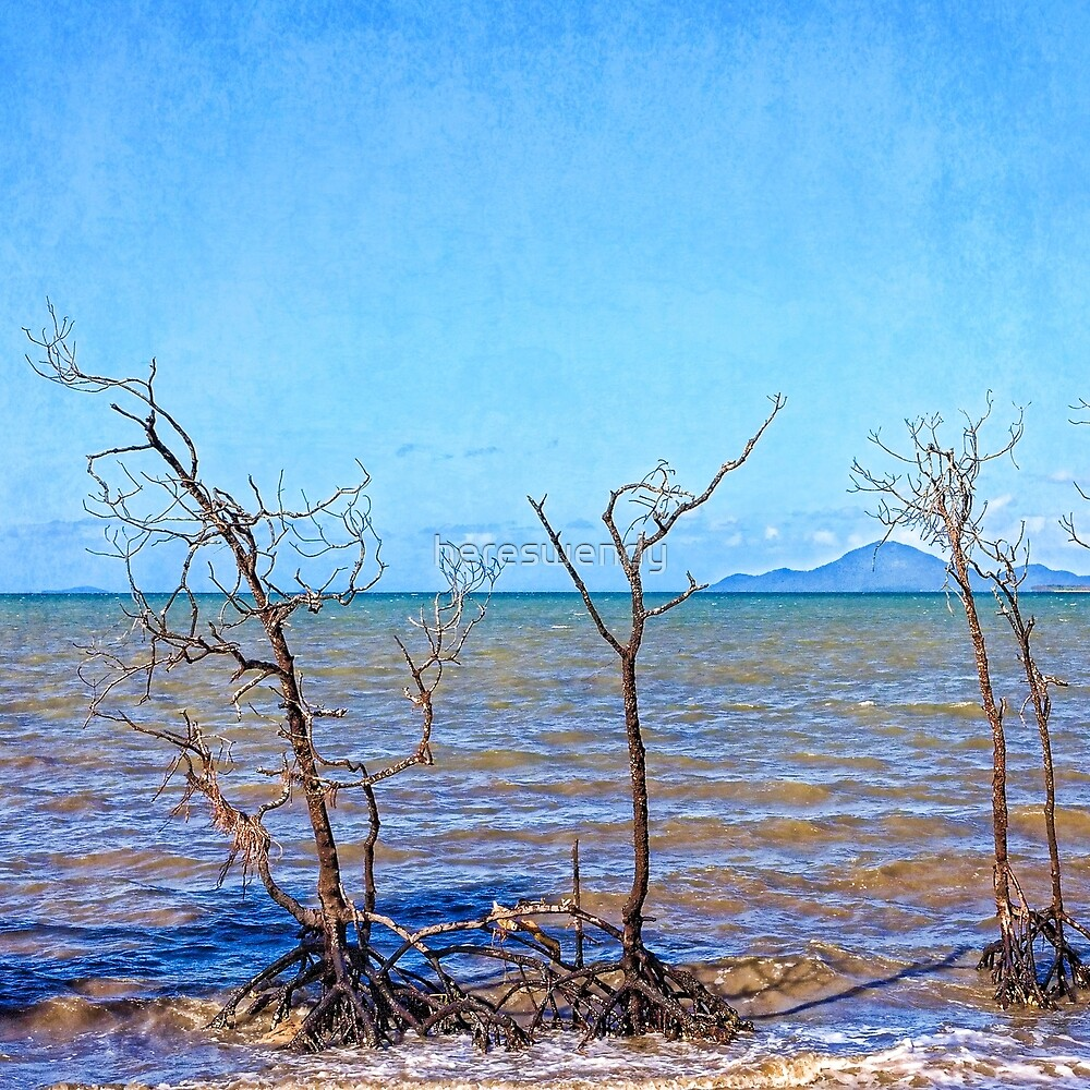 Dead mangroves after a cyclone by hereswendy