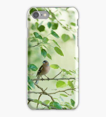 Carcasa iPhone Pinzón / iPhone case Chaffinch iPhone Case/Skin