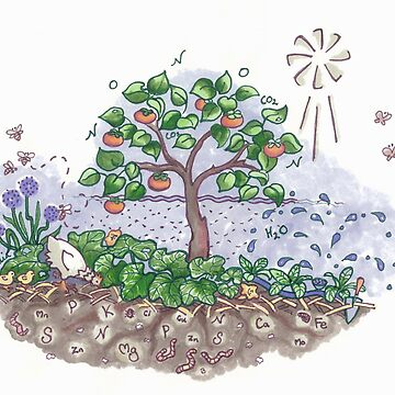 Soil life with Persimmons  by CeciMacaulay