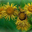 Wild Flowers by Gerda Grice
