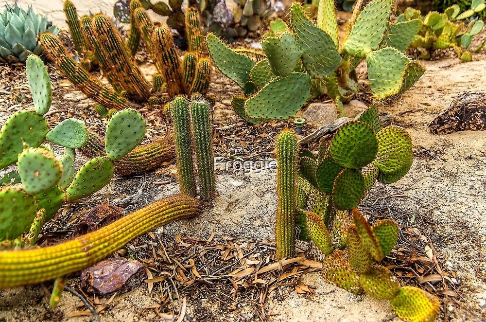 The cactus garden by Froggie