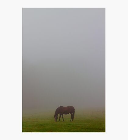 Lost in the morning fog Photographic Print