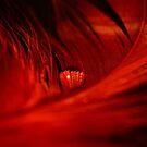 Waterdrop on Red Feather by Mattie Bryant