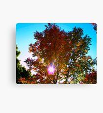 Autumn levity Canvas Print