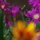 Color Burst by adbetron