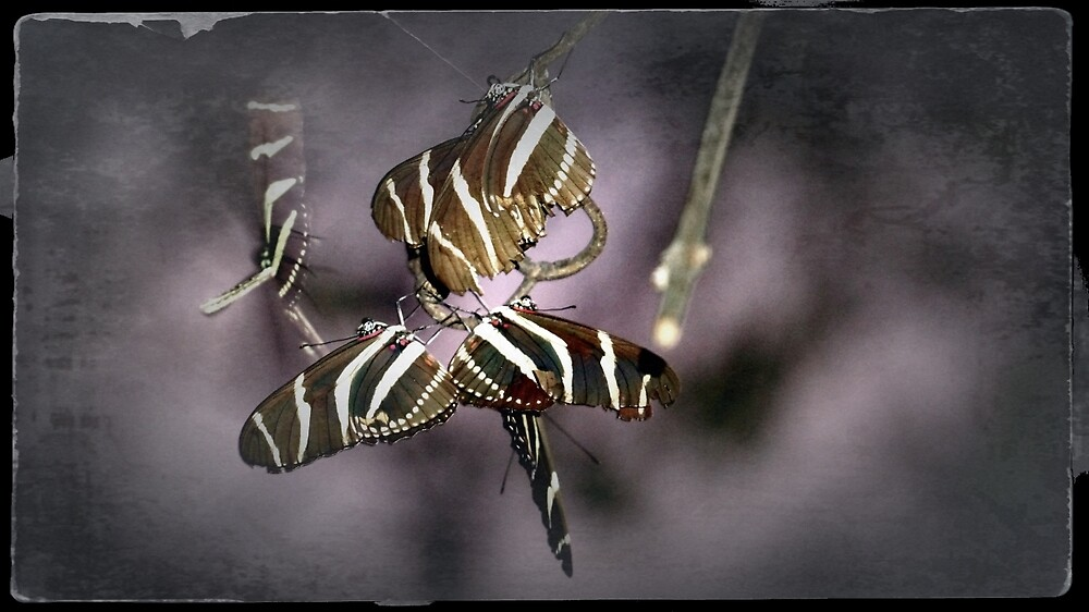 Butterfly Party by Gina Dazzo