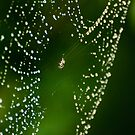 Jewelled Web by Dilshara Hill