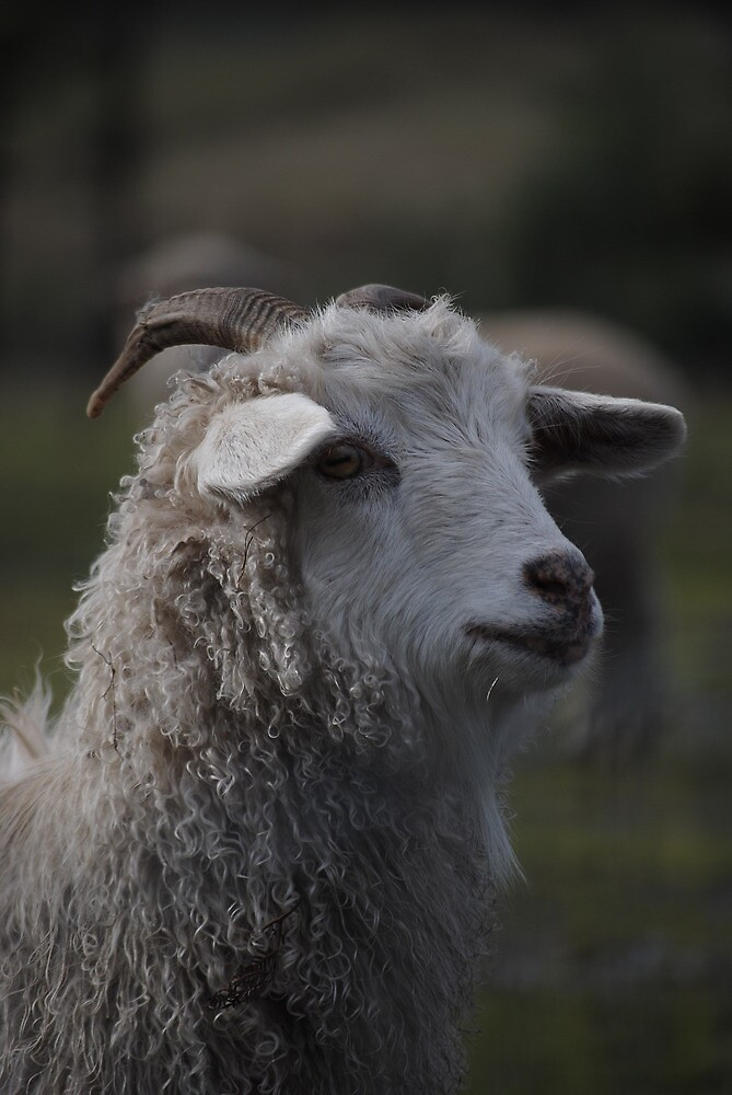 This is a goat by Katastrophuck