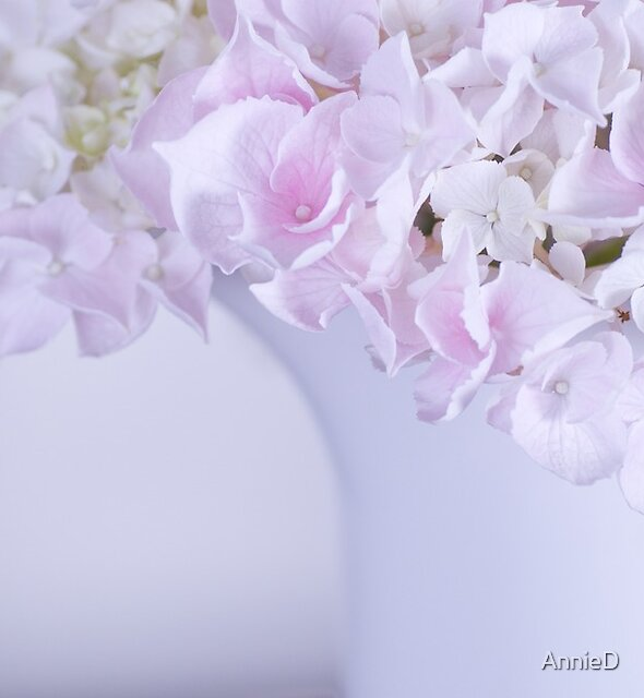 Hydrangea by AnnieD