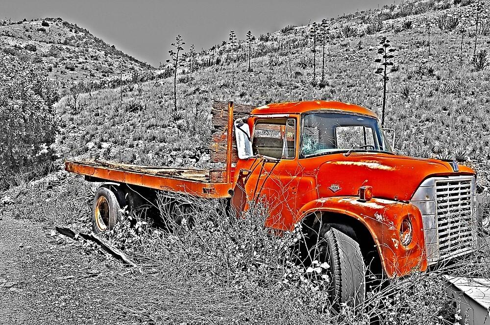 Blazing Orange by Gina Dazzo