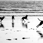Shoreline Funtime by Sally J Hunter