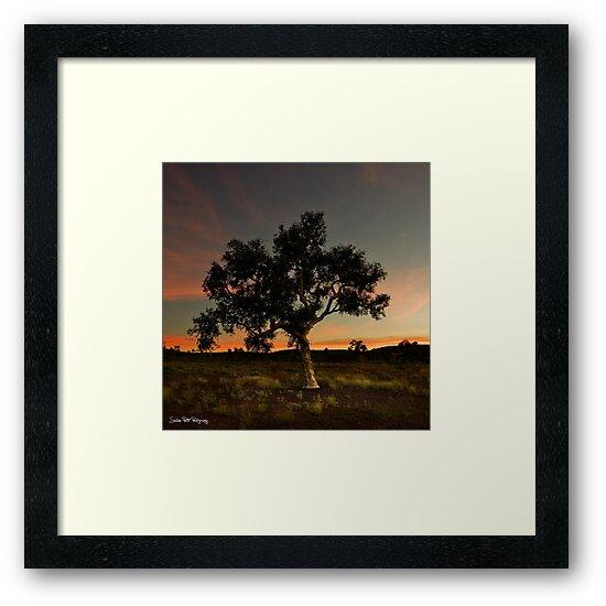tree by Sheldon Pettit