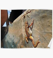 Frog in trough Poster