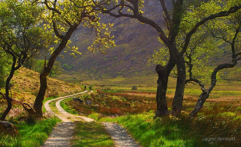 Arch of Trees by raymcdermott