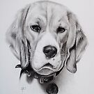 Beagle by Peter Lawton