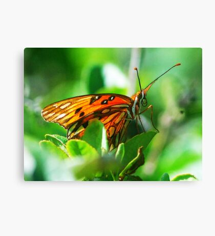 Butterfly face Canvas Print