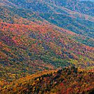 Nature's Canvas - Great Smoky Mountains National Park, TN by Matthew Kocin