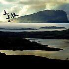 A Flight of Evening. by Kenart