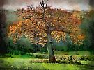 Tree in Autumn, Somerset, UK by David Carton