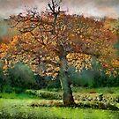 Tree in Autumn, Somerset, UK by David Carton