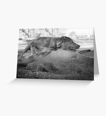 Dogs with game face on .33 Greeting Card