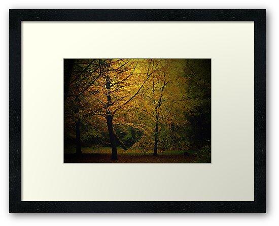 Golden Autumn Colours by Chris Goodwin