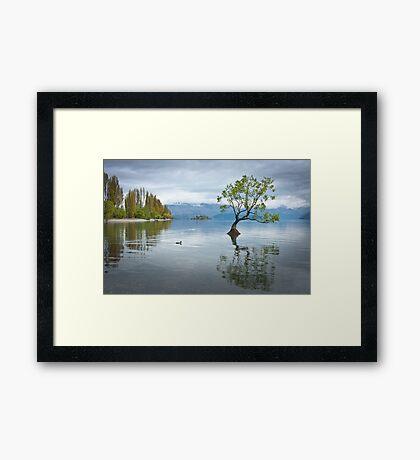 Wanaka Duck Framed Print