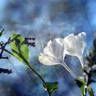 Delight of Plumbago by Lozzar Flowers & Art