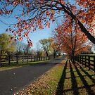 Kentucky Backroads by Jeanne Sheridan