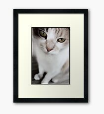 Furry Emotions Framed Print