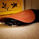 Jasper hides under a placemat by Lynn Starner