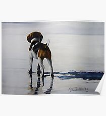 Beagle Reflections Poster