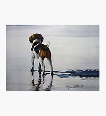 Beagle Reflections Photographic Print