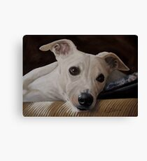 Whippet At Rest Canvas Print
