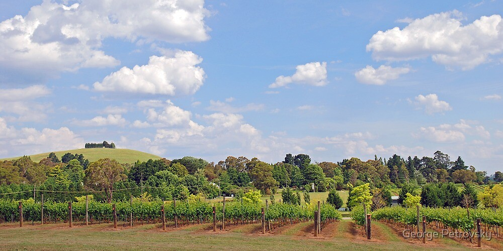 Southern Higlands Winery Panorama by George Petrovsky