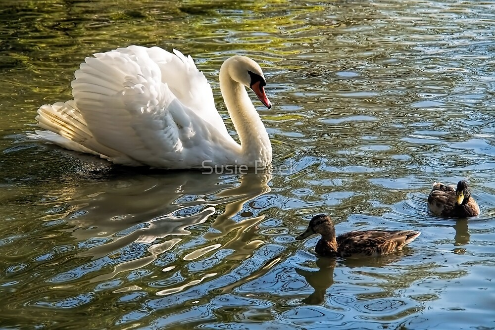 Feathered Companions  by Susie Peek