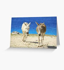 Bonaire donkeys Greeting Card