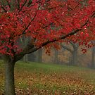 Red Tree by Kelly Chiara