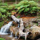 Araluen Creek by Eve Parry