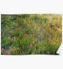 Alpine Meadow II Poster