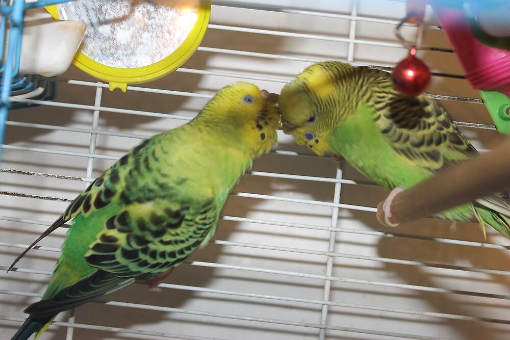 Bo grooming Peep by Cosmosphere