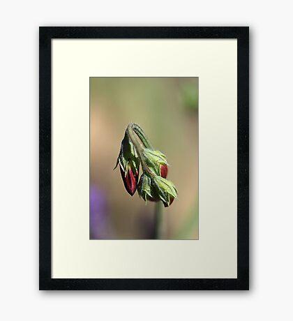 Split Pea Framed Print