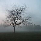 alone in the mist by lucycat