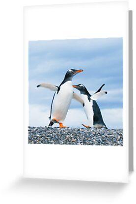 gentoo penguins by javarman