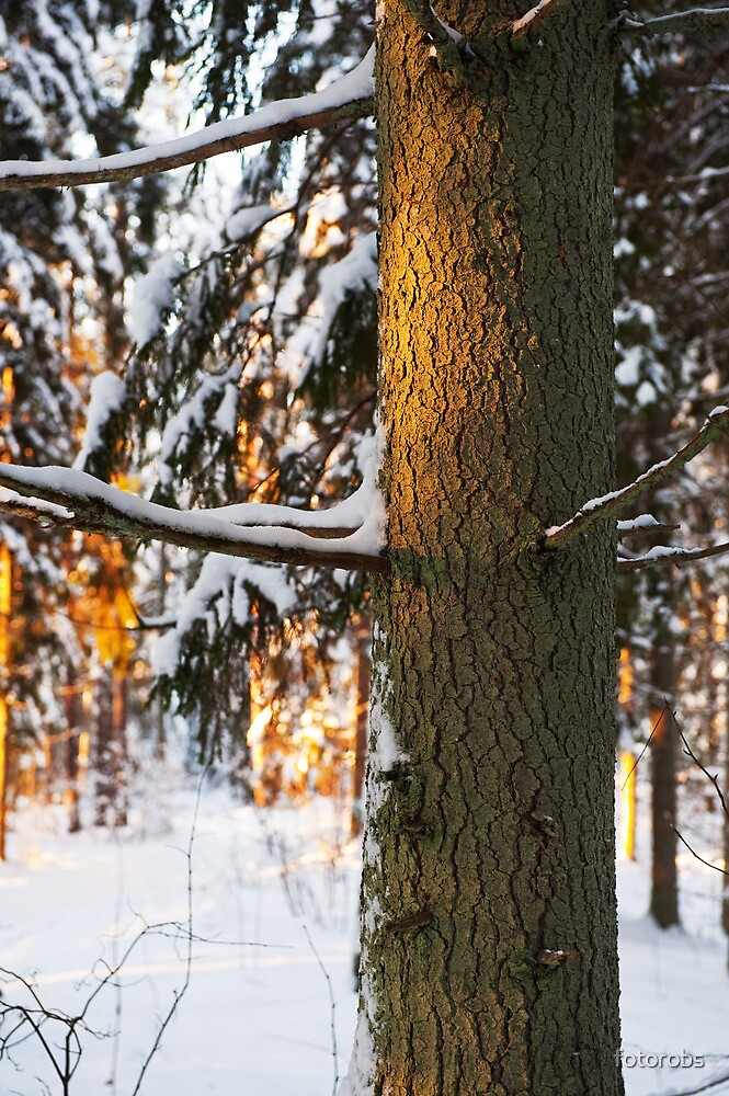 Forest in the winter by fotorobs