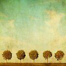 Grunge image of 5 trees by javarman