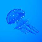 Blue jellyfish by javarman